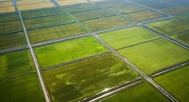 زراعة الرز عن طريق الهاتف